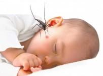 Bệnh sốt xuất huyết ở trẻ em và điều cần biết 2